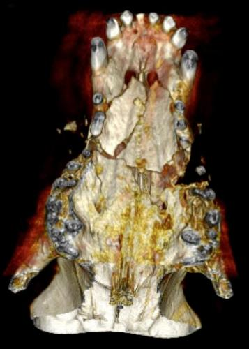 CT 3D Reconstruction of Canine Palatal Bone Fractures